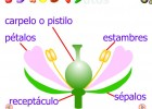 Frutos | Recurso educativo 47845