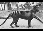 Extinct Animals 20th Century! | Recurso educativo 343832