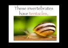 The invertebrates song | Recurso educativo 404348